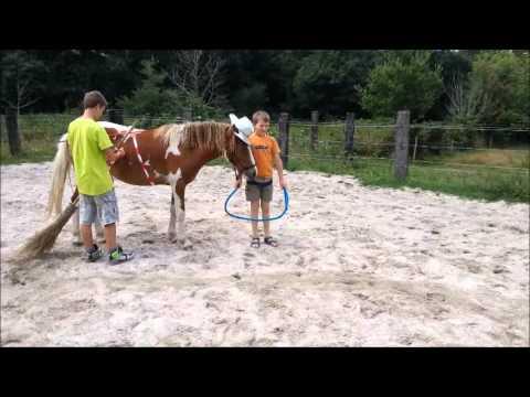 déguisement poneys