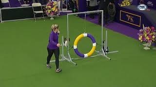 Best of 2019 WKC Masters Agility Championship