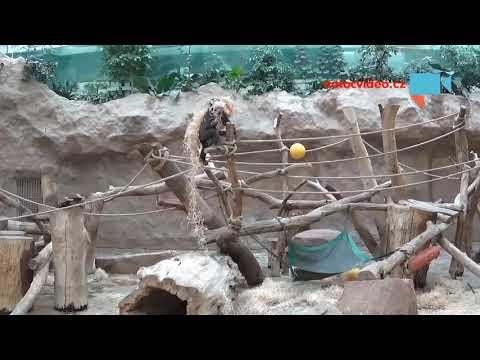 Gorily v ZOO Praha