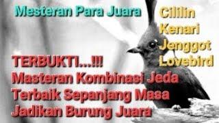 Masteran burung kicau terbukti juara suara lengkap cililin kenari jenggot lovebird