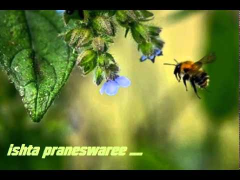 Video ISHTA PRANESWARI CHUKKU download in MP3, 3GP, MP4, WEBM, AVI, FLV January 2017