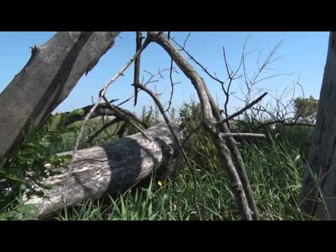 "Run2GunTV S3E9 Seg1 ""East River SD Whitetail"""