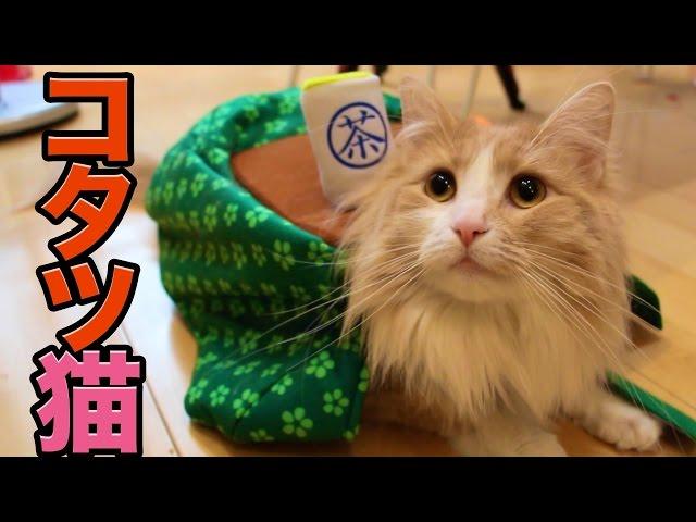 コタツが大好きな猫【POP】 PDS