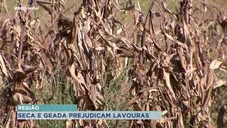 Seca e geada prejudicam plantações na região