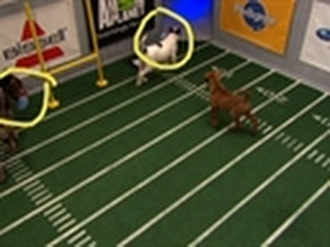 Historic Double Touchdown | Puppy Bowl VIII