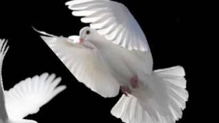 merpati putih - Chrisye