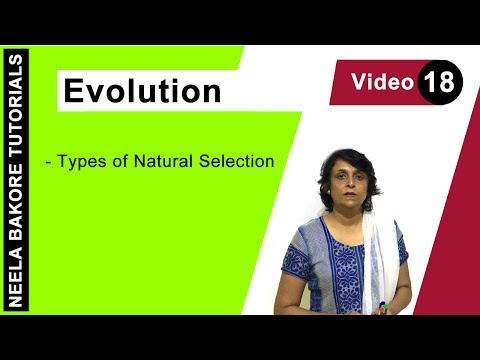 Evolution - Types of Natural Selection