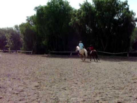 Max Horseback Riding Training