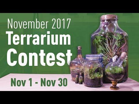 November 2017 Terrarium Contest! (Nov. 1 - Nov. 30)_Legjobb videók: Terrárium, Vivárium