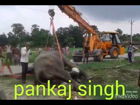 Video Hathi mere sathi download in MP3, 3GP, MP4, WEBM, AVI, FLV January 2017