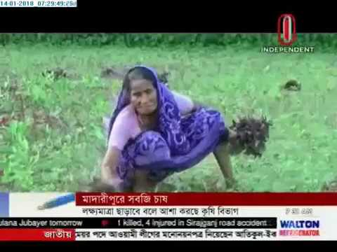 Vegetable farming puts smile on farmers' face in Madaripur (14-01-2018)