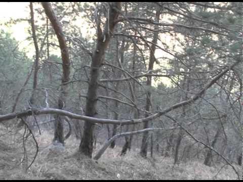 Еще один боевик ликвидирован в Унцукульском районе Дагестана - DomaVideo.Ru