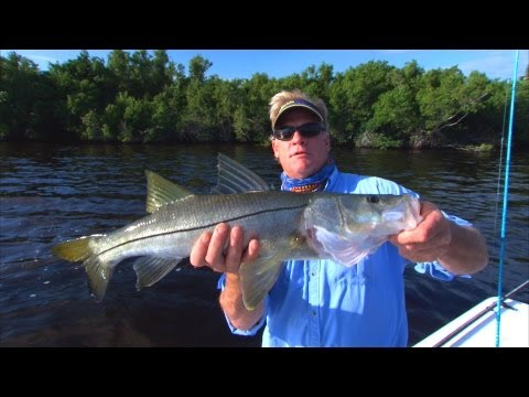 Sweetwater Snook (NEW EPISODE) - Awesome TOPWATER Explosions