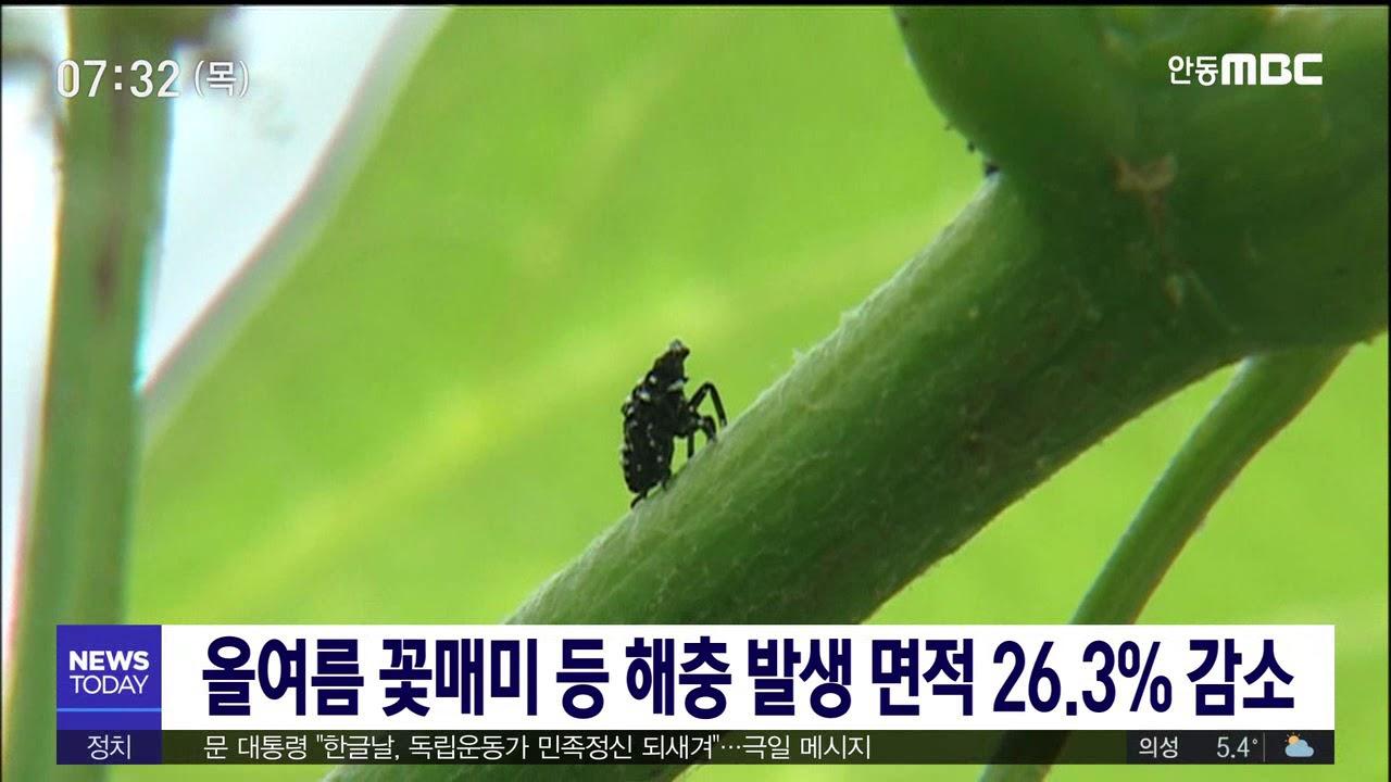 올여름 꽃매미 등 해충 발생 면적 26.3% 감소