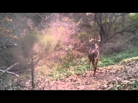 Buck in the Wind!