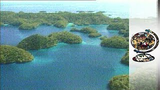 Paradise in Palau (1996): Green mounds only a few metres apart rise out of the glassy, blue sea. Under the water, fluorescent fish...