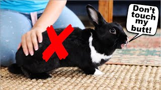 15 Things Rabbits Hate About Humans! by Lennon The Bunny