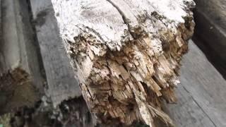 Антисептик для деревянного дома Просепт