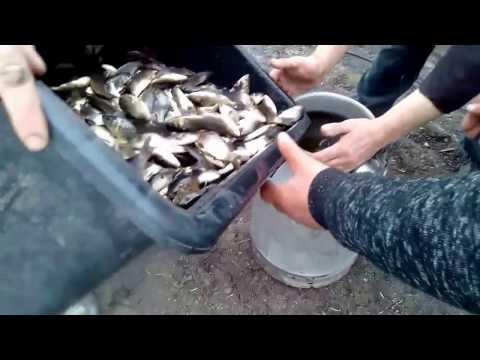 линь рыба разведение видео
