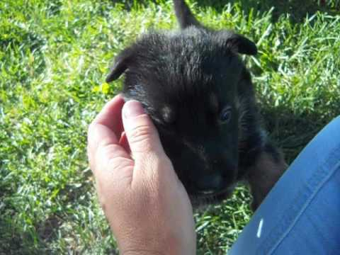 Foxy at 4 weeks of age