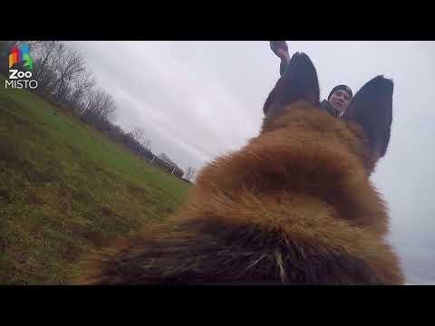 ГоПро и Немецкая Овчарка - Мир глазами собаки