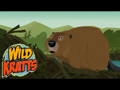 Wild Kratts PBS - Build It Beaver - Wild Kratts 2018 Full Episodes 8