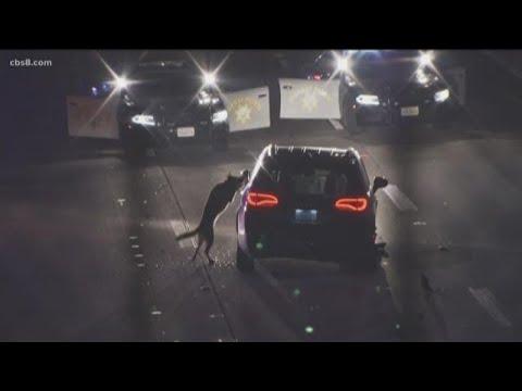 San Diego Sheriff's K-9 takedown goes viral