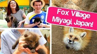 Miyagi Japan  City new picture : ZAO FOX VILLAGE! Miyagi, Japan! キツネ村 // Cute Japan!
