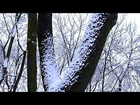 Футажи зима картинки