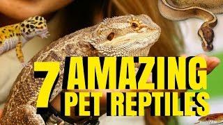 7 AMAZING PETS [REPTILES] TO OWN! PROS VS CONS! SnakeBytesTV by AnimalBytesTV