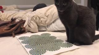 Pokazał kotu znane złudzenie optyczne! Reakcja zwierzaka jest niesamowita i ciężko się nie śmiać!