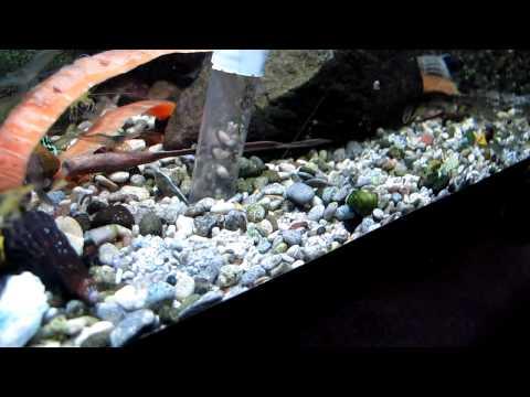 Сифон для аквариума видео
