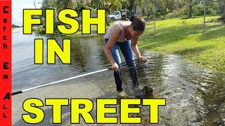 Video FISHING in THE STREET! Catching EXOTIC Fish in HURRICANE FLOODING! MP3, 3GP, MP4, WEBM, AVI, FLV Oktober 2017