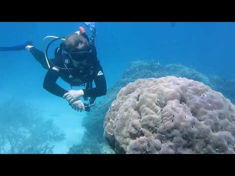 Scuba Diving Port Douglas  - Great Barrier Reef