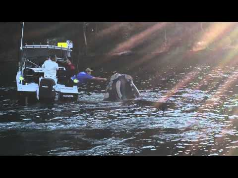fishermen assist desperate whale cast off trash in close come upon