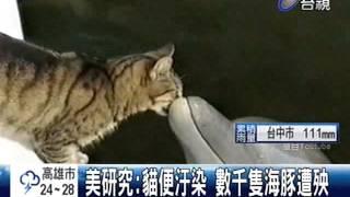 美研究:貓便汙染數千隻海豚遭殃