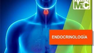 Endocrinología: Hipotalamo, Hipofisis...