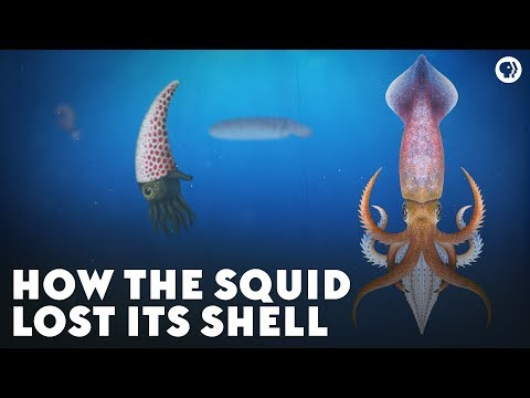 How the Squid Lost Its Shell