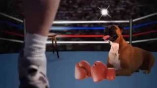 Dog Breeds 101 Video: Boxer