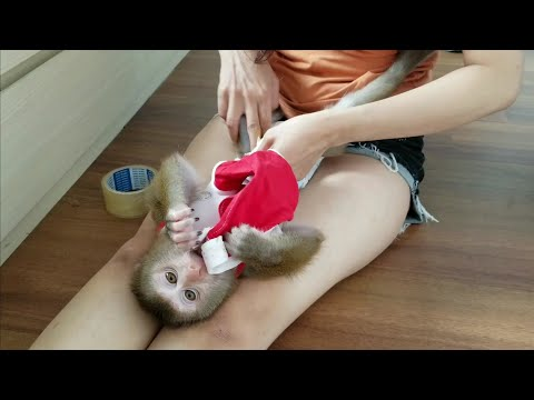 Monkey Baby Nui | Nui Is Happy And Healthy