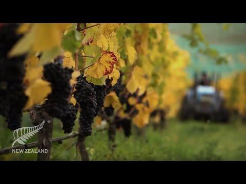 New Zealand Wine Story