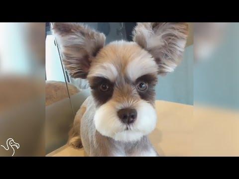 un-cane-supermodello