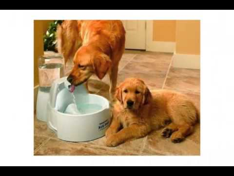 Barky Pet Products – Best Dog Training Collars, Dog Bowls, Dog Crates for Sale & More