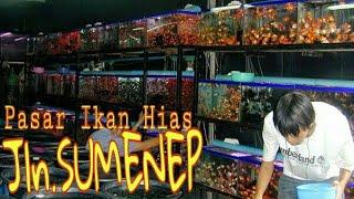 Download Video Surganya Ikan Hias - Pasar Sumenep Menteng Jakarta Pusat MP3 3GP MP4