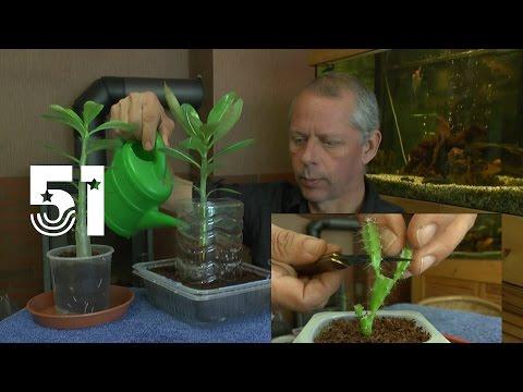 Die Sämlinge und wie geht es weiter mit den Exoten und anderen Pflanzen Teil 51