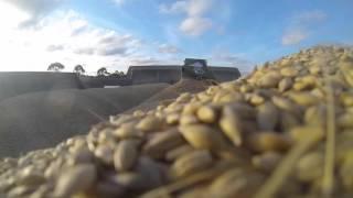 Esperance Australia  city photos gallery : Australia harvest 2015, Esperance, Dorglen