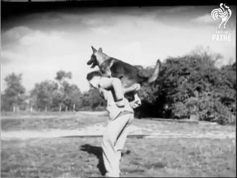 El perro con los saltos mas largos del mundo
