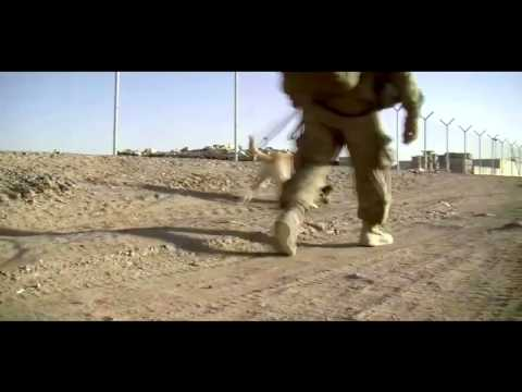 0 Working Dog Videos from Afghanistan