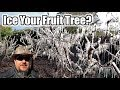 """Download Lagu How To """"ICE"""" Your Blooming Fruit Tree To Protect It From A Frost Or Freeze?!? Mp3 Free"""