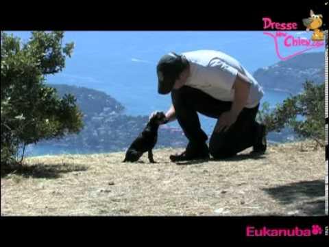 comment construire un chien assis la r 233 ponse est sur admicile fr